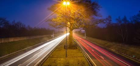 Foto van Bruggeling bekroond in Nederlandse natuurfotowedstrijd