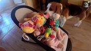 Te schattig: hond begraaft baby onder speeltjes