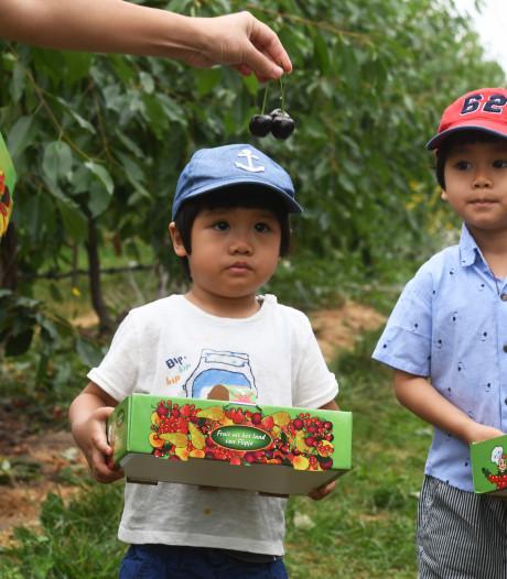 'Streeckerij de Betuwe' naam voor fruitbelevingspark Wadenoijen