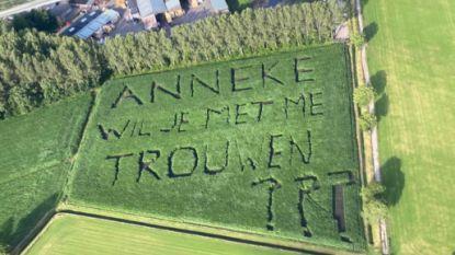 Het origineelste huwelijksaanzoek van deze zomer? Joost (31) 'plant' zijn vraag in maïsveld tegen Belgische grens