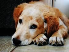 Werknemer hoeft van arts 14 dagen niet te werken vanwege zijn zieke hond