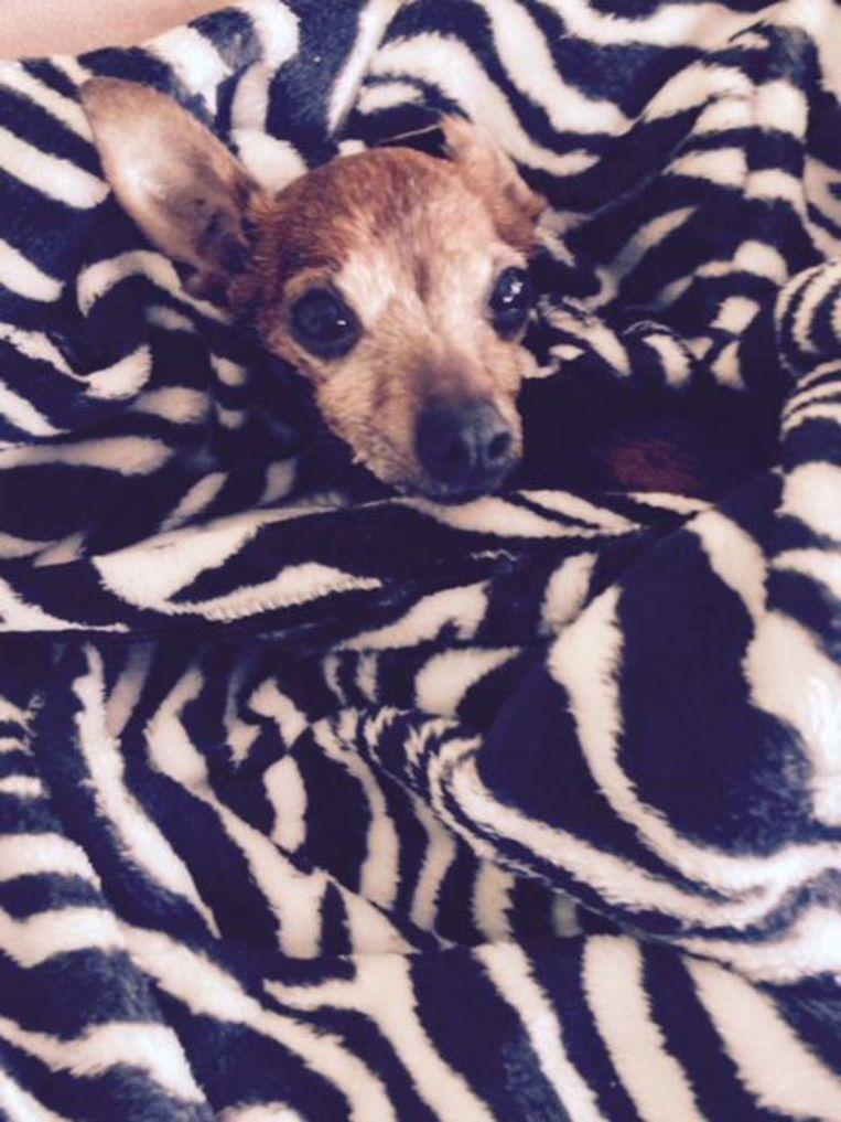 Hondje Xena, die als gevolg van rookintoxicatie stierf.