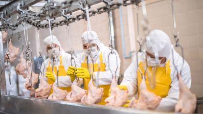 8 mensen in ziekenhuis na ammoniaklek in fabriek in Moeskroen