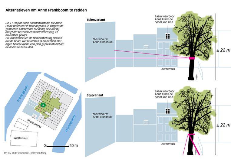 Alternatieven voor de redding van de Anne Frankboom (Remy Jon Ming - de Volkskrant) Beeld