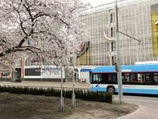Stuur ons uw mooiste foto's van de lentebloesem