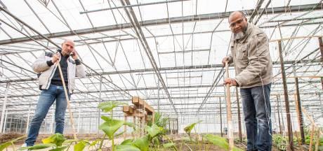 Surinamers redden tuinders in het Westland: 'Alsof ik weer even in de Amazone ben'