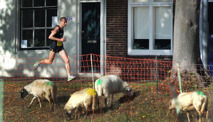De Singelloop, met hier een beeld van koploper Erwin Harmes in 2017, gaat niet door.