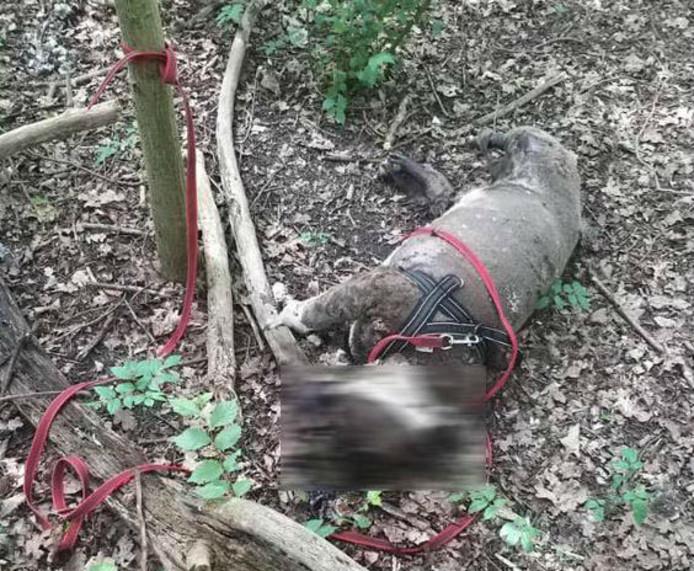 Dode hond in Wilhelminapark Rijswijk.