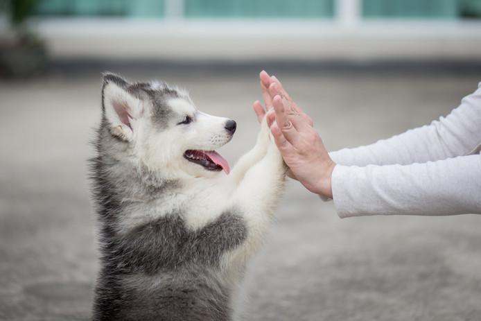 Foto ter illustratie. Hondenrestaurant Mutts Canine Cantina in Forth Worth, Texas, zoekt een stagiair om betaald hondjes te knuffelen.