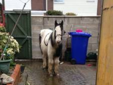 Kleindochter (13) bestelt paard en laat het afleveren bij oma