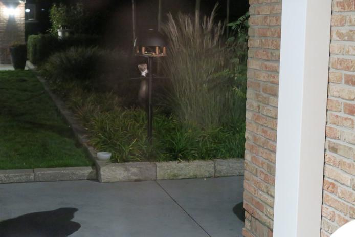 Elina trof een steenmarter aan in het vogelvoederhuisje in haar tuin
