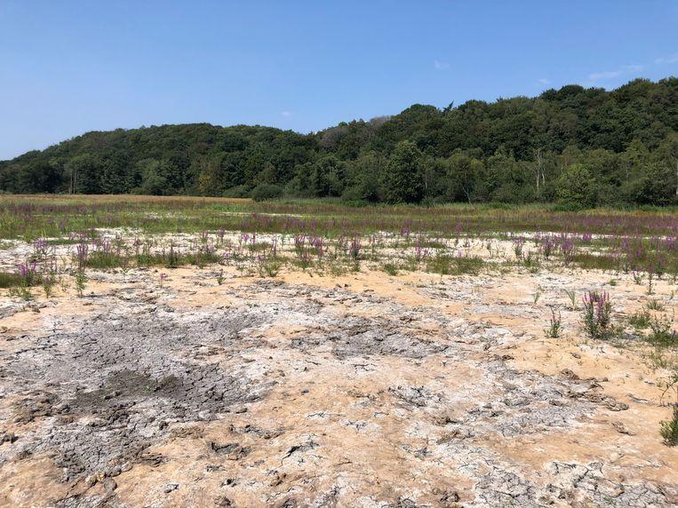 Verdroogde natuur in Natuurgebied De Diepen bij Milsbeek. Beeld Jan van Mierlo/Natuurmonumenten