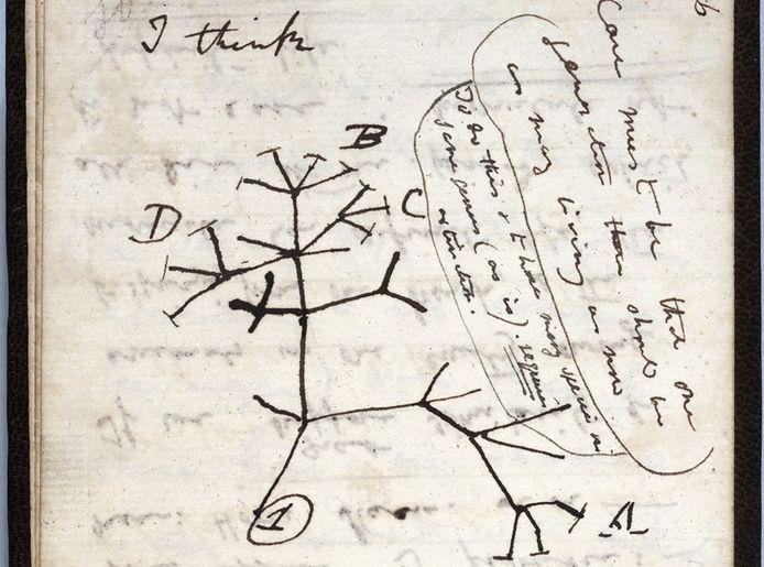 """L'esquisse de l'""""arbre de la vie"""" par Darwin."""