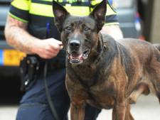 Politiehond overmeestert messentrekker