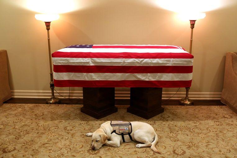Labrador Sully, een hond getraind om veteranen en mensen met een handicap te helpen, ligt te dommelen bij de kist van de vrijdag overleden George H.W. Bush. Beeld REUTERS