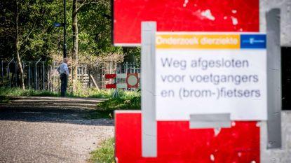 Coronavirus in Nederland mogelijk overgegaan van nerts op een mens