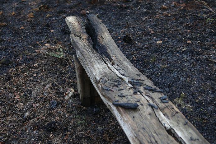 De schade na de bosbrand bij de Geffense Plas in Oss.