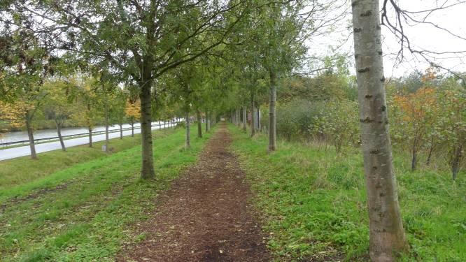 395 zieke bomen langs Finse piste worden verwijderd