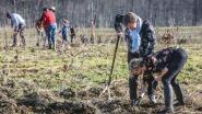 Publieke bosplantactie in kazerne van Ieper