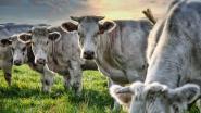 Buren bij Boeren gunt blik achter schermen van lokale boerderijen