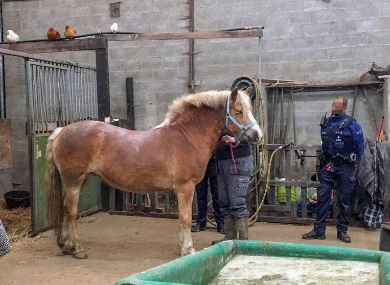 Onder meer dit paard werd in beslag genomen.