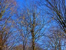 'Een oogverblindende schoonheid die me toeroept dat de lente eraan komt'