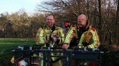 Brandweer redt katje uit boom