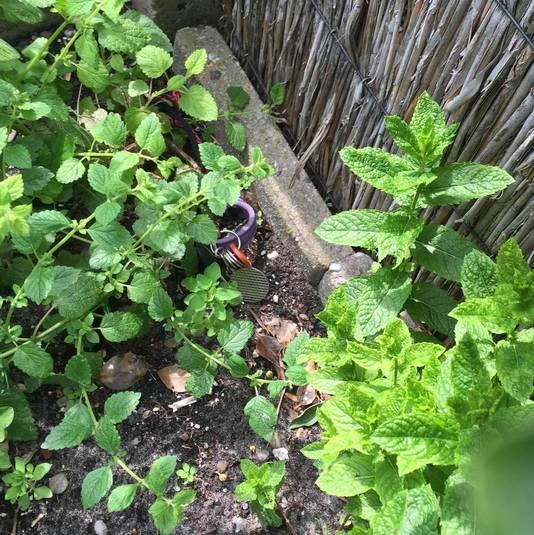 Natasja vond haar sleutels terug tussen het groen in een steegje vlakbij haar huis.