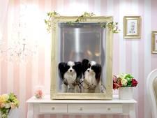 Op Japanse hondenbeurs is niets te gek