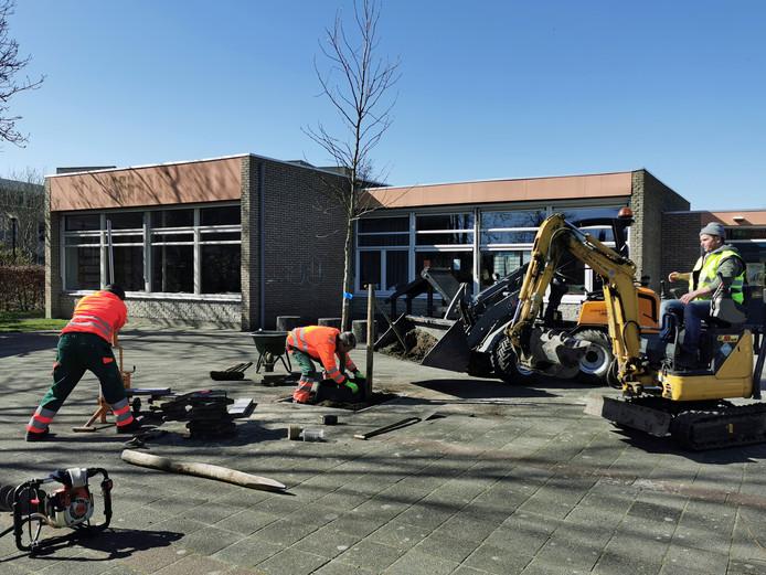 De Schuttershoek in IJzendijke heeft sinds vandaag een amberboom en struiken op het schoolplein.