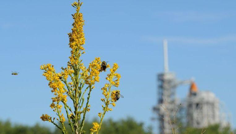 Bijen op een bloem Beeld afp