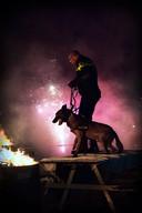Politiehonden laten zich niet afschrikken door het geknal met vuurwerk.