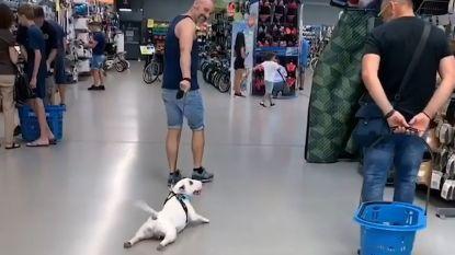 Is dit de meest luie hond ter wereld?
