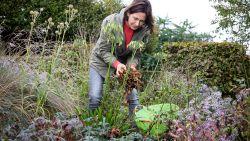 Actieplan voor november: zo maak je je tuin helemaal klaar voor de winter