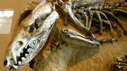 Kat van 13 miljoen jaar oud: klein dier, grote jager