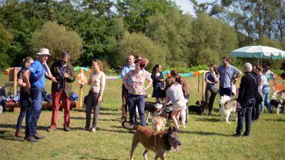 VIDEO. Grootste hondenlosloopweide van Leuven opent in Wijgmaal