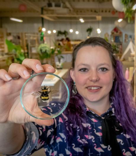 Nieuwe hype: vlinders en insecten in een glazen schaaltje