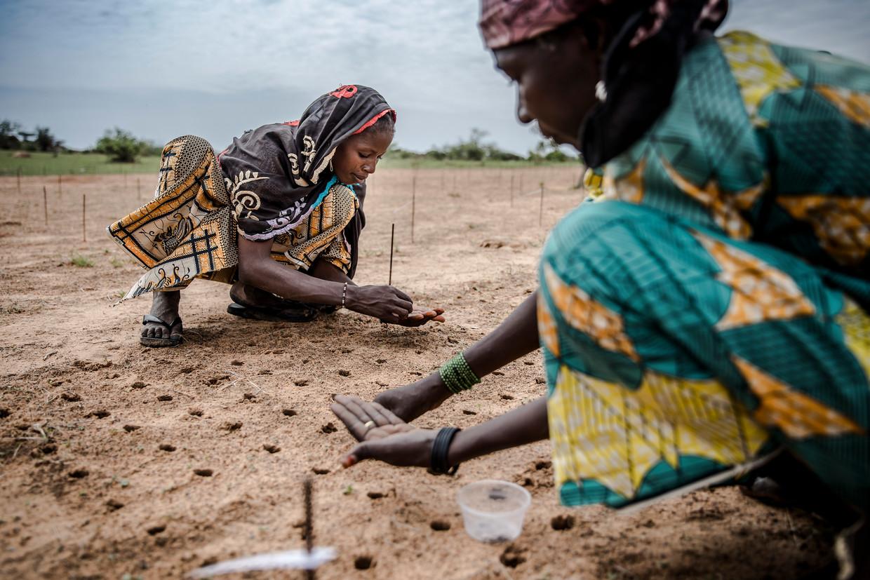 Vrouwen planten zaadjes voor het herbebossingsproject in de Afrikaanse Sahel, eind juli dit jaar.