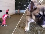 Puppy's mateloos populair in coronatijd: 'Werd saai in huis'
