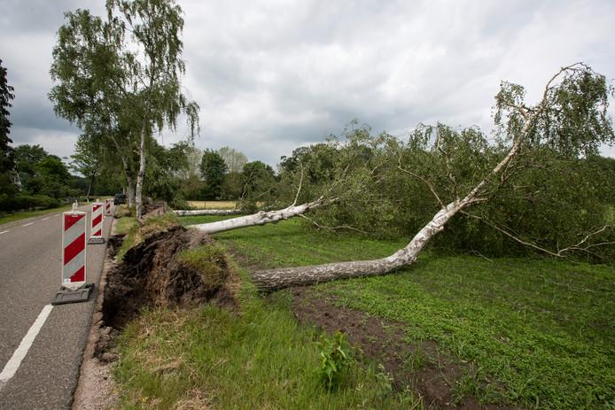 Aan de Rhienderensestraat in Brummen raakten veel bomen ontworteld.