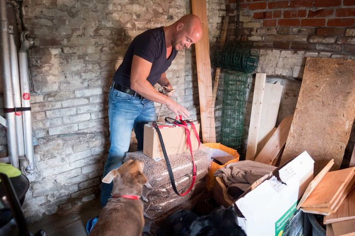 Bo Messemaker zamelt in voor dieren Sint-Maarten .