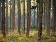 PvdD wil natuur in Gelderland aankopen door 'woudfunding'