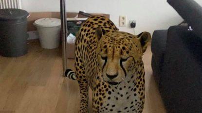 Adopteer eens een 3D-huisdier dankzij Google