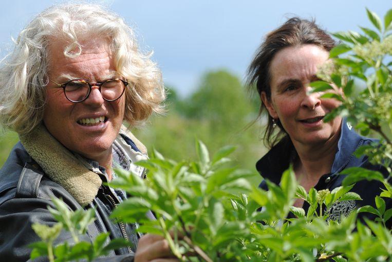 Has van Helvoort met zijn vrouw Marieke telen hun eigen vlierbessen. Beeld Jan Segerink