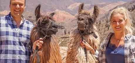 Frans Bauer wordt bespuugd door lama's en Guus Meeuwis oefent voor dancebattle