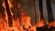"""Australië in de ban van """"catastrofaal"""" brandgevaar: tot 20.000 brandweermannen rukken uit"""