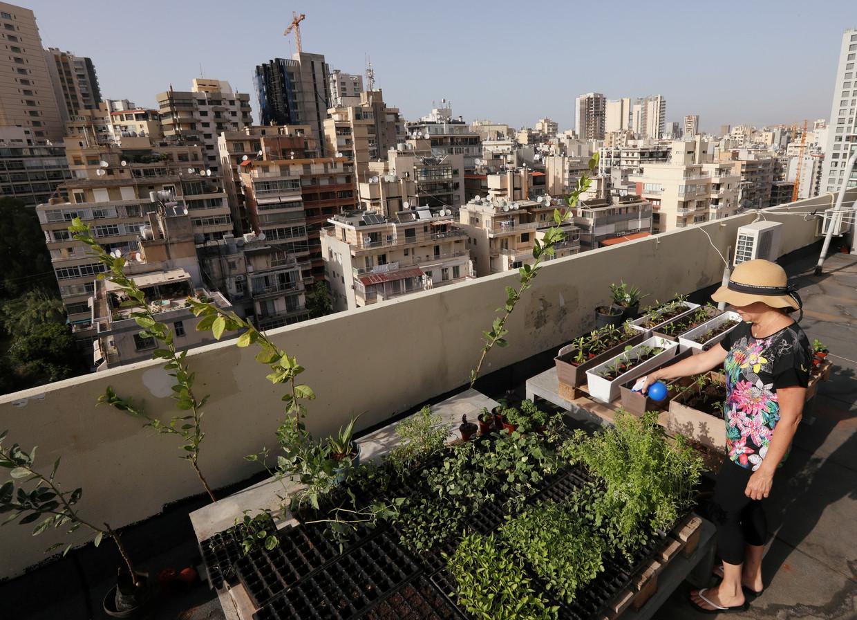 Steeds meer inwoners van Libanon telen hun eigen groente en fruit, omdat die in de winkels onbetaalbaar worden. Beeld Mohamed Azakir / Reuters