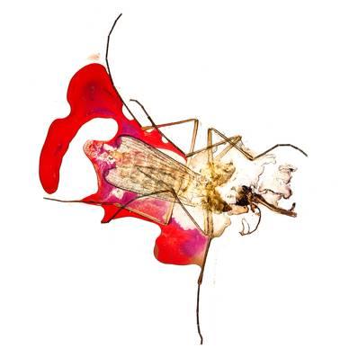 Wat weten we van muggen, en wat weet de mug van ons?