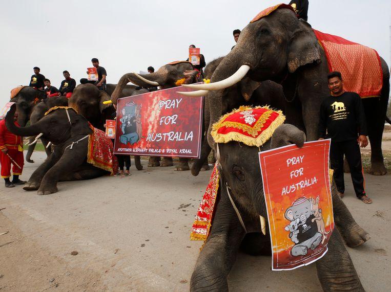 Ook de kleinste olifanten van het reservaat in de Thaise stad Ayutthaya lopen mee in de stille mars voor Australië.