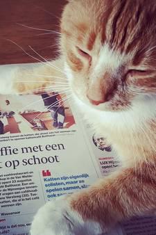 Wereld Kattendag: wie heeft de leukste kat? Stuur je foto in en doe mee!